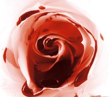 bleedingrose-small
