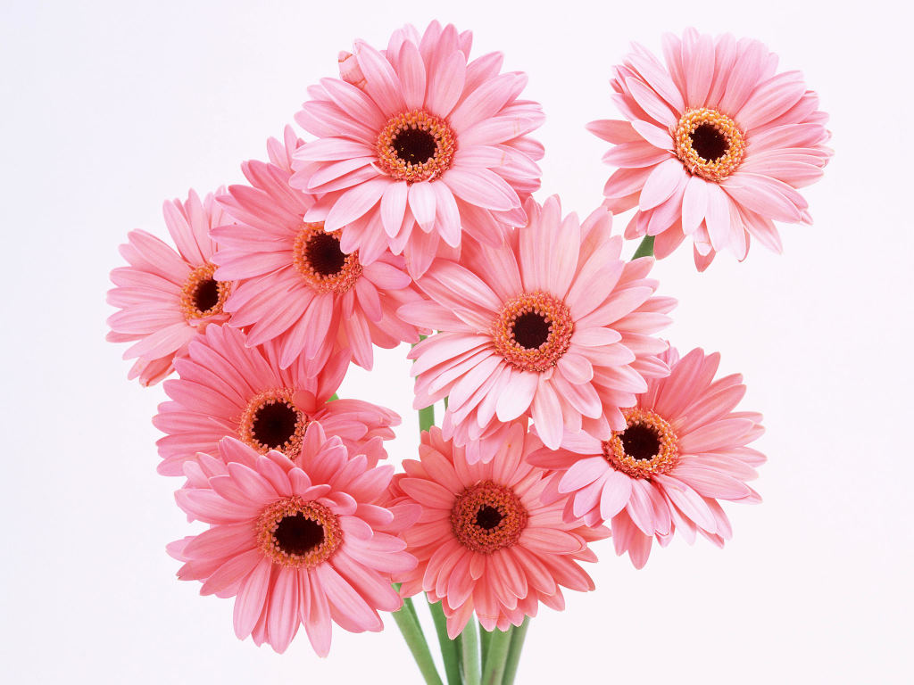 Gerbera Daisy Bouquet Delivery